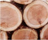 木材の温もり